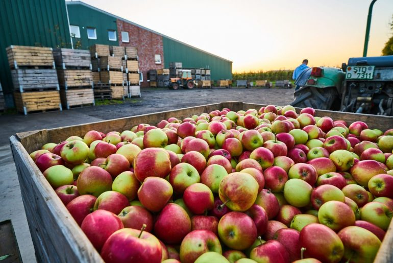 Äpfelpflücken-mampfbar